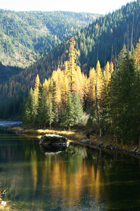 Autumn larch along the Lochsa River (Borg Hendrickson photo)
