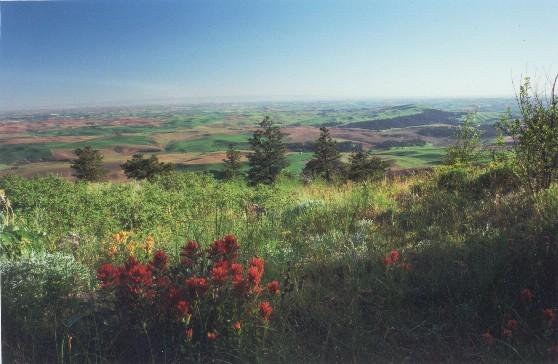 Palouse Prairie (Alison Meyer photo)